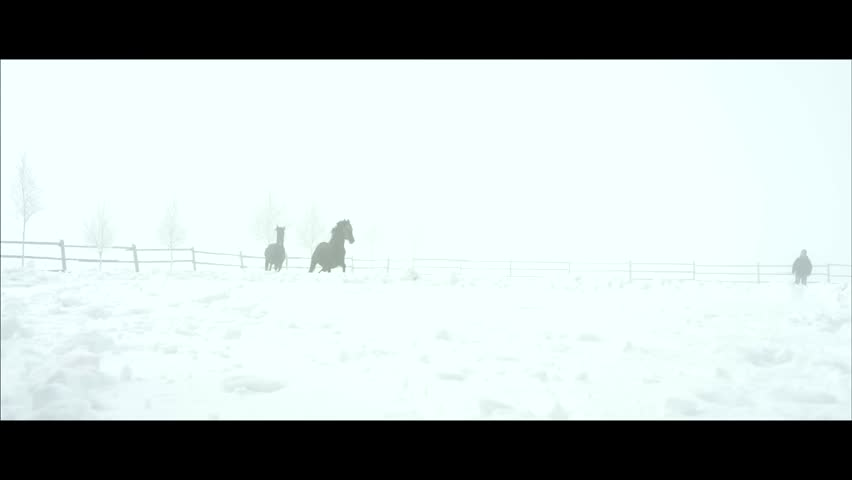 Horses galop outdoor in slowmotion during a Cold Winter weather