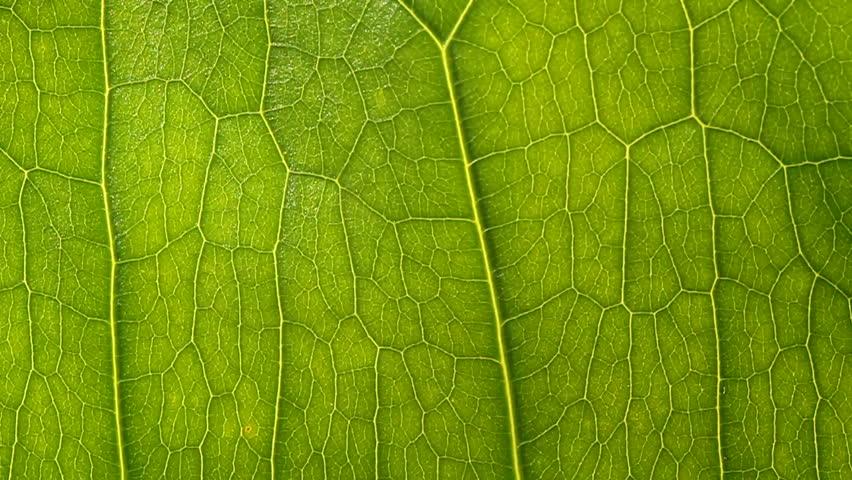 green leaf close up - HD stock video clip