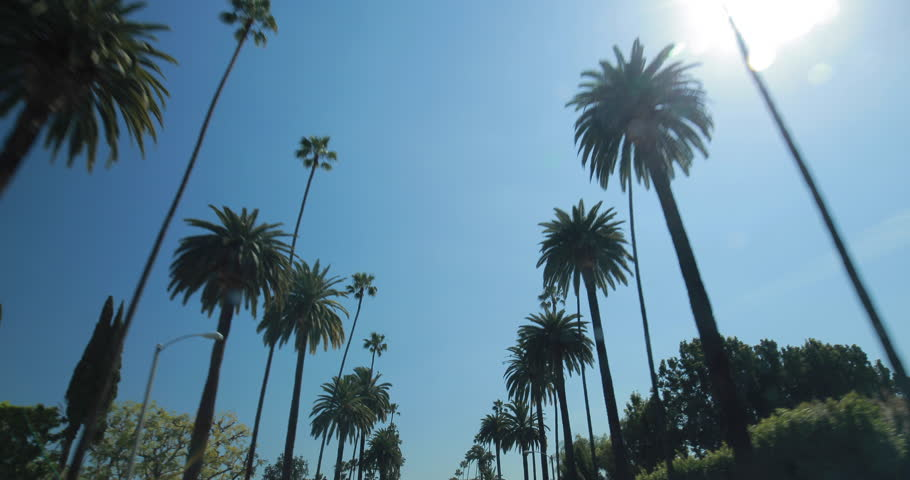 Palm Trees moving driving car window POV shot  | Shutterstock HD Video #9047422