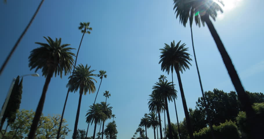 Palm Trees moving driving car window POV shot  | Shutterstock HD Video #9047431