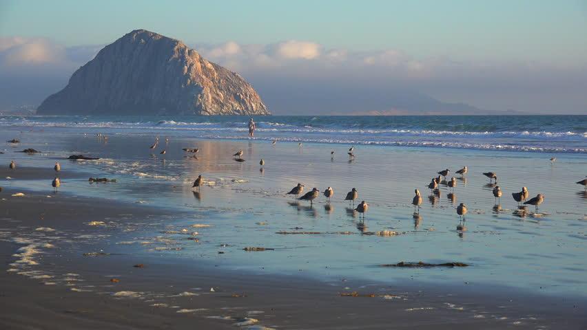 MORRO BAY, CALIFORNIA - CIRCA 2014 - Shorebirds and people in front of the beautiful Morro Bay rock along California's central coast. - 4K stock footage clip