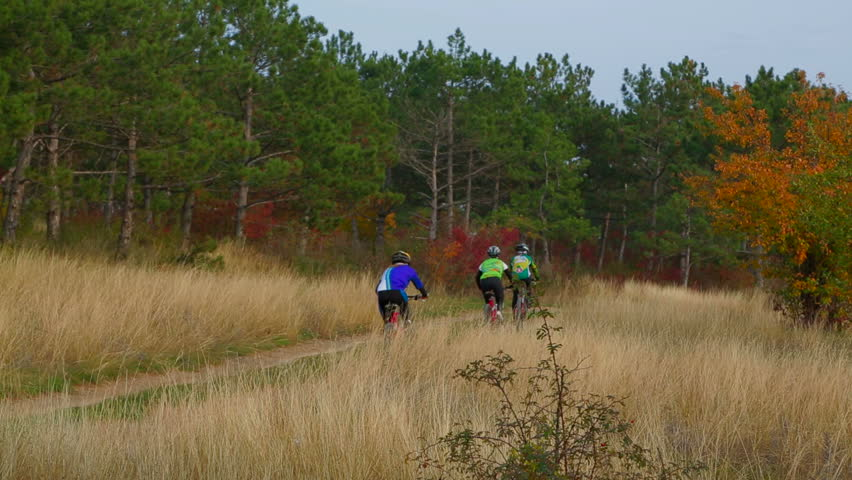 Static shot of three cyclists in sportswear and helmets riding along footpath and hiding in autumn forest. The trees in the forest are still green but the grass and bushes took autumn colors.