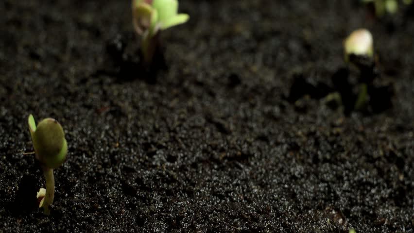 growing shoots