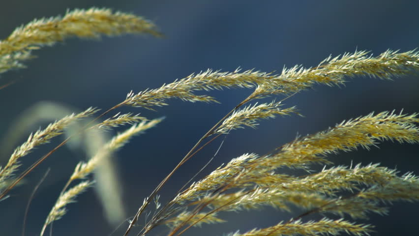 Plant swaying in the breeze - HD stock footage clip