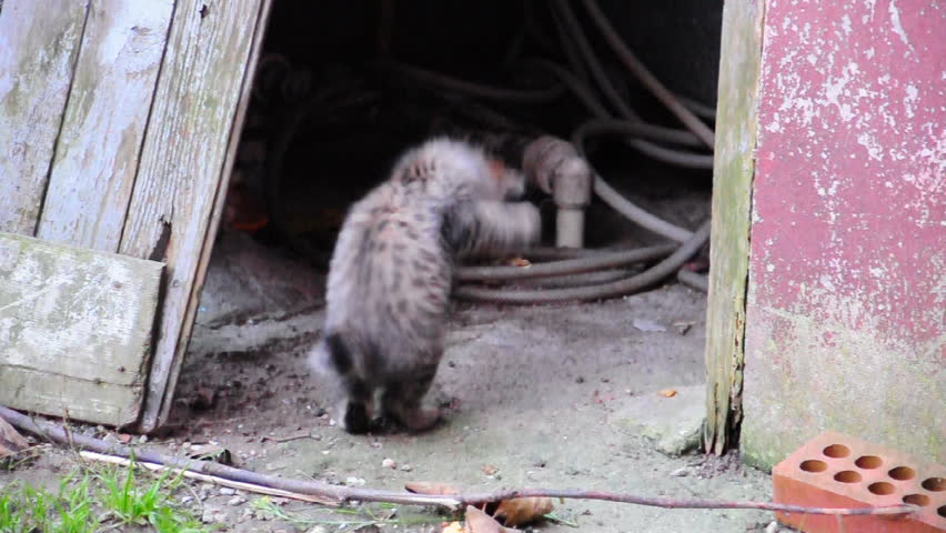 cute kittens playing - HD stock video clip