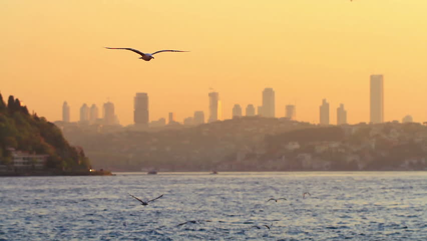 Flock of bird flying against city skyline during sunset. Seagulls slow motion